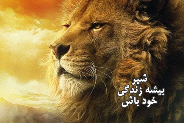 lionb