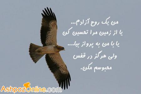 shadmehr_ashpazonline_weblog_41340654561